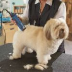 a dog being clipped