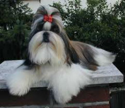 How To Groom A Long Haired Dog The Well Groomed Pet