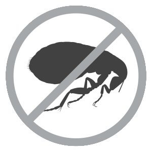 Say no to flea sign
