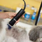 Using Andis clipper comb attachments on a dog