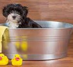 Puppy in a tub